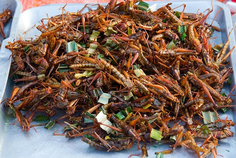 Of-Bugs-and-Insects--Taste-for-the-Extreme-art2